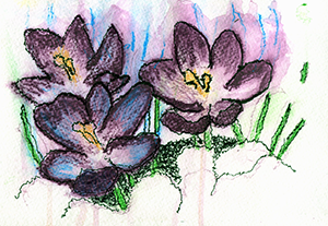 Crocus in the snow watercolor by Kate Wolfe-Jenson