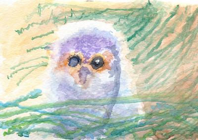 flammulated owl nestling