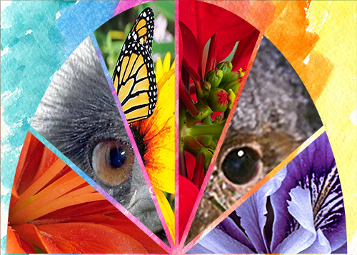 Collage of nature photographs