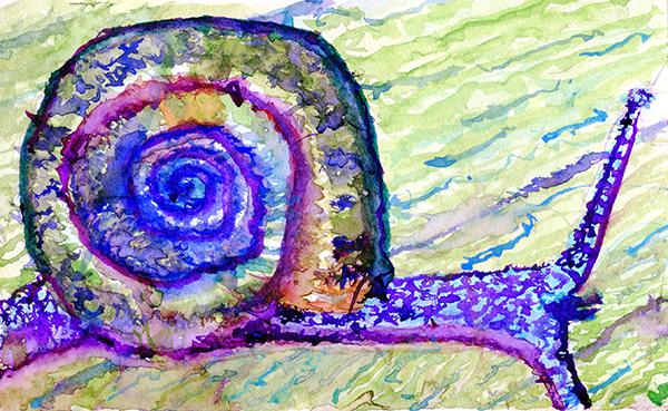boggomoss snail