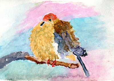 Mourning* Dove