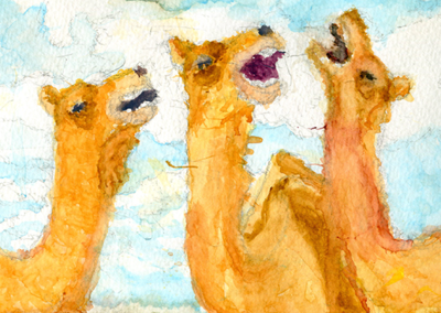 laughing camels
